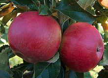La pomme Idared